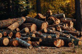 Raccoglieva e tagliava legna illegalmente a Ottiglio: denunciato 46enne
