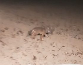 Avvistato un branco di lupi a Valle S. Bartolomeo: la preoccupazione dei cittadini