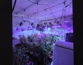 Carabinieri scoprono coltivazione di marijuana in un cascinale a Castellazzo