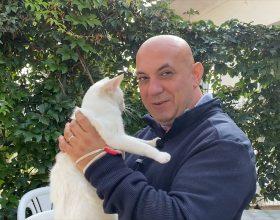 Appello del gattile di Alessandria: 50 gattini attendono una famiglia e servono coperte