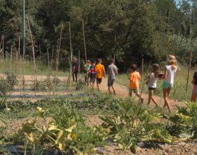 Agriturist Alessandria: 30 anni d'informazione agroalimentare per scuole e famiglie