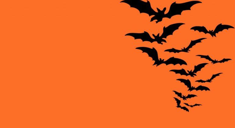 Bat Talks al Museo Kosmos: cosa sono e quando si terranno