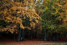 Foliàge e sapori d'autunno: trekking e natura a Romagnese